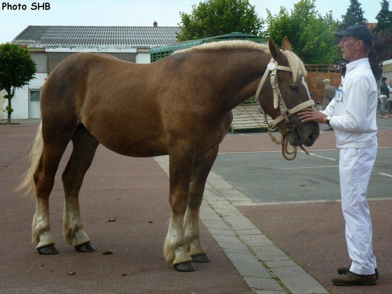 Cheyenne de Colinctun - Concours Elevage local - Marquise (62) - 17 Juin 2014 - photo SHB
