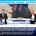 julieguillaume09.2014_12_01_prmiereeditionBFMTV