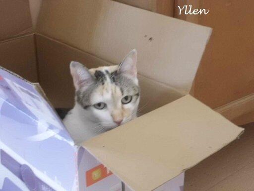 Liloo et son carton