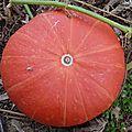 potiron rouge vif d'étampes - - www.passionpotager.canalblog.com