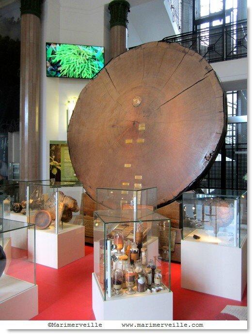 Galerie Botanique du Muséum - Marimerveille