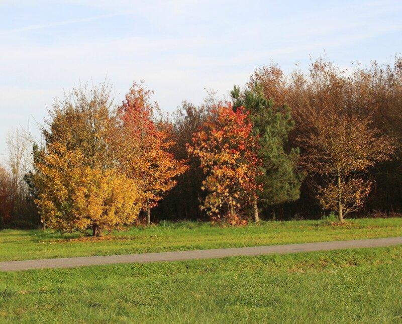 couleurs d'automne3