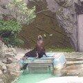 Tokyo elephant de mer I