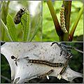 À la rencontre des insectes (3)