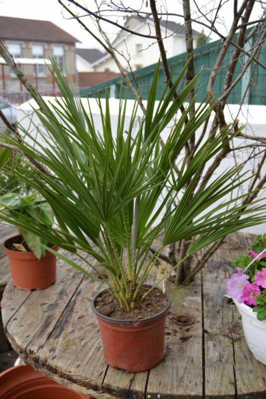 Plantes exterieures vivaces images for Les plantes vivaces