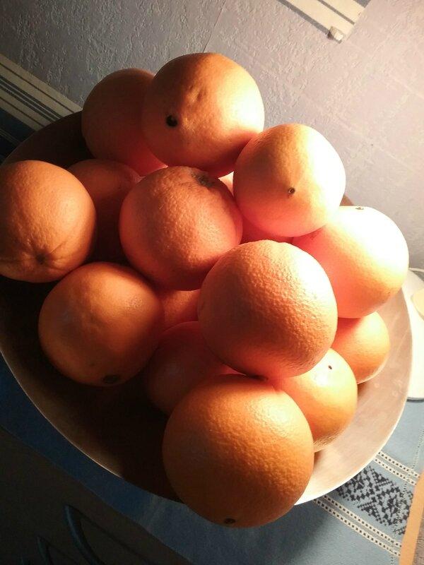 Gâteau aux oranges confites maison et au chocolat 089