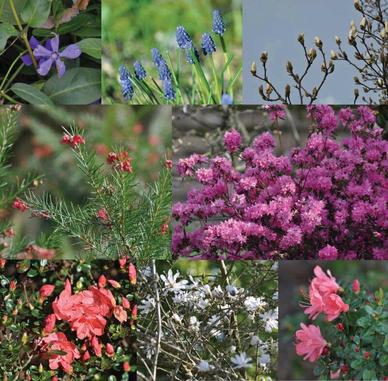 Jardin des plantes 2014-03-04 autres plantes