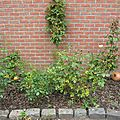mai-2005-jardin 008