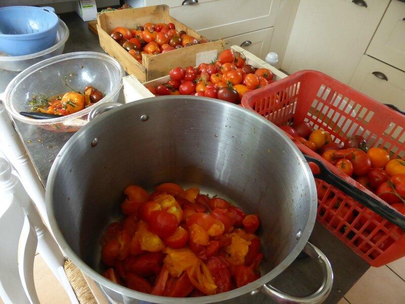 4-tomates, sauce tomate (2)