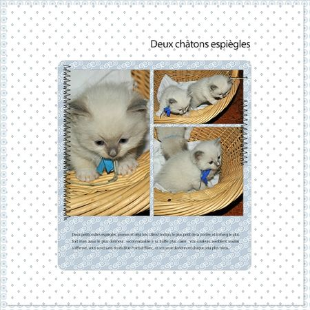 page DCS - Dady - Template Aout+ sa partie kit
