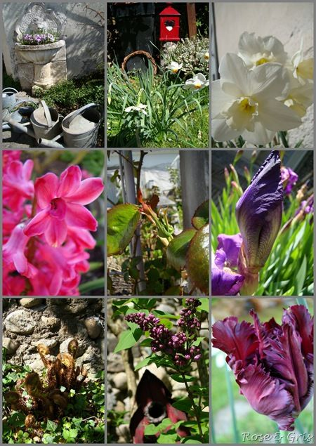 printemps 2011 au jardin 3 pf
