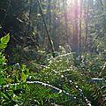Fougères au soleil