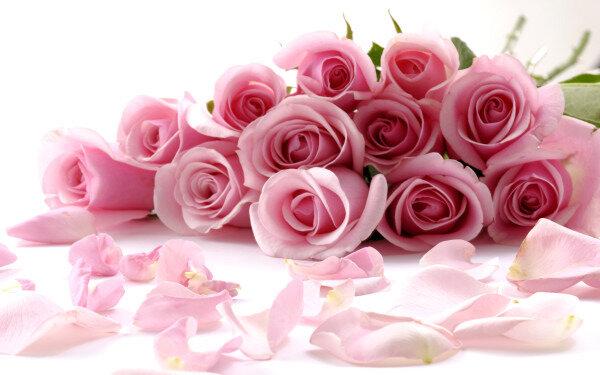 Rose_010006