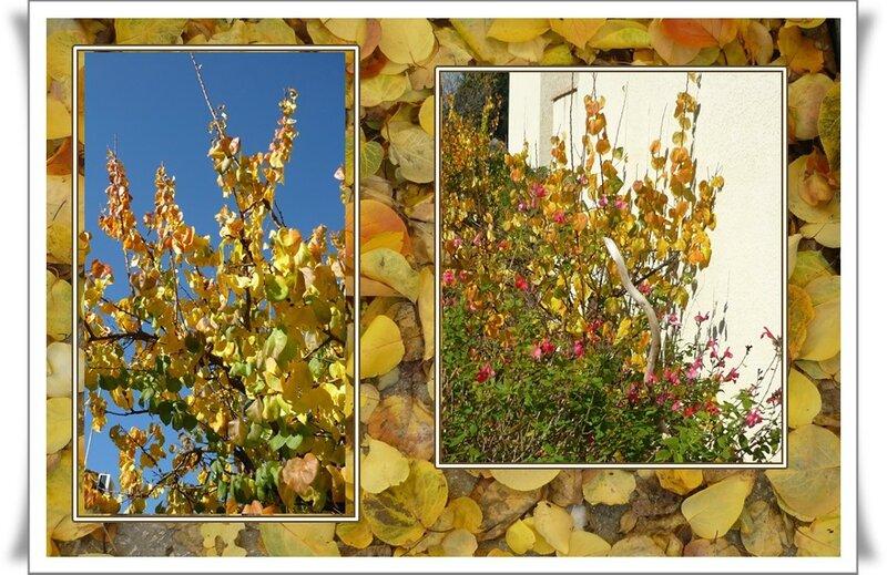 couleursd'automne2