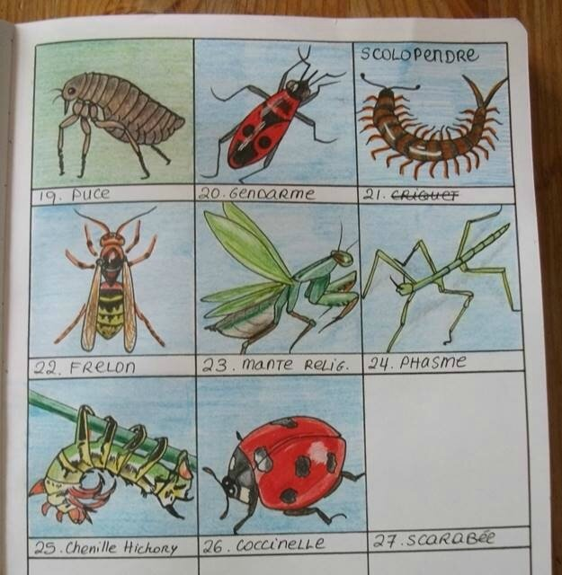 agrib insectes au 26