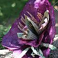 Fleur médusée