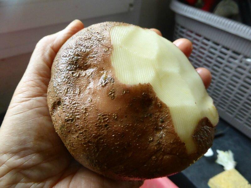 2-pommes de terre mira (5)
