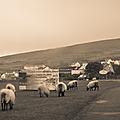 Quelques jours dans l'ouest de l'irlande - county mayo