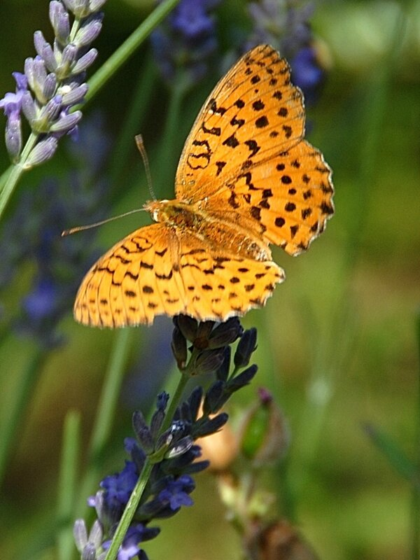 Papillons 2 19-09-17