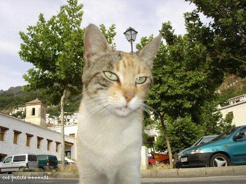 chat en espagne