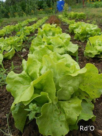 salades-blog-01