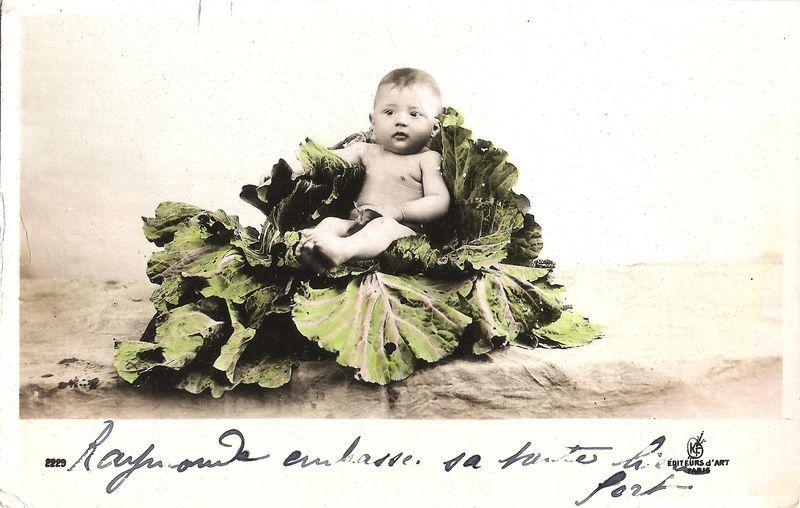 Bébé dans un chou