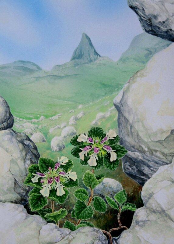 Flore des Pyrénées 24 ter