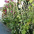 Juillet 2010 Mariage Blandine-Oléron-Gap 353