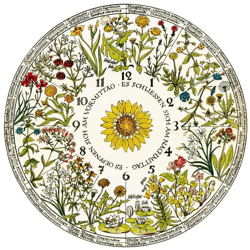 Horloge Végétale de Linné