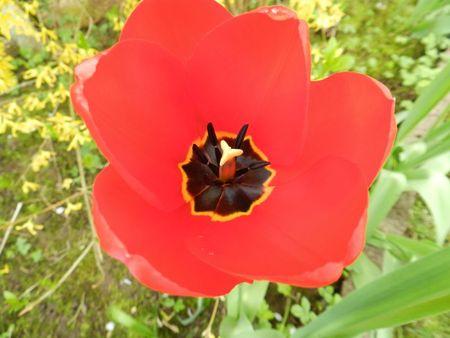fleurs de printemps 001