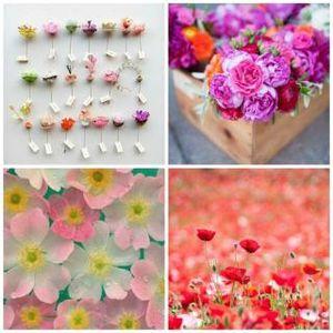 Fleurs de Carole