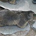 05 Les Marmottes (56)