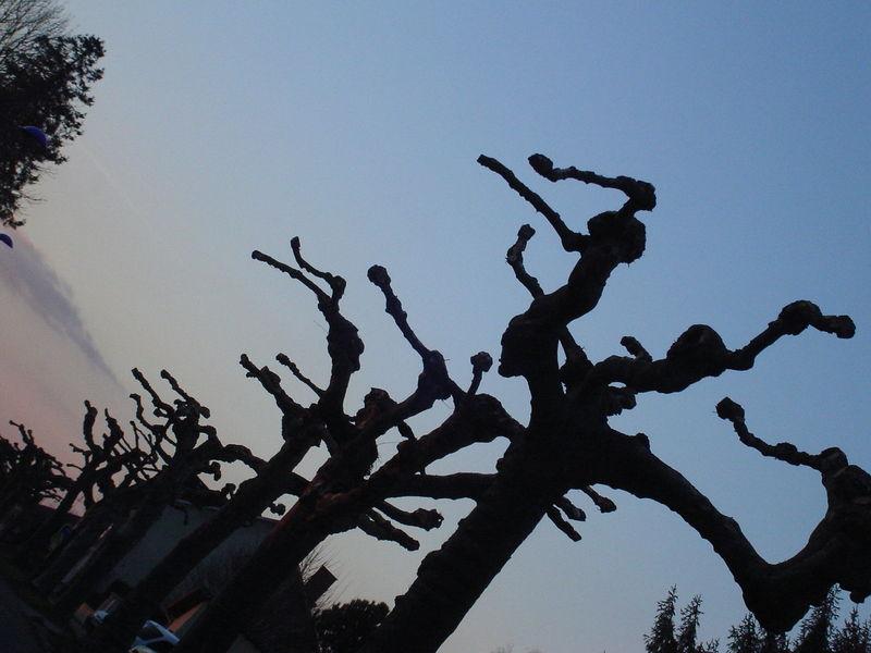 2009 02 vacances de février 045