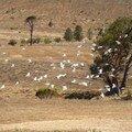 Australie Faune Flore Paysages - janvier 2005 (40)