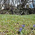 Rocher de Gourdon 2013-03-10 073 (Copier)