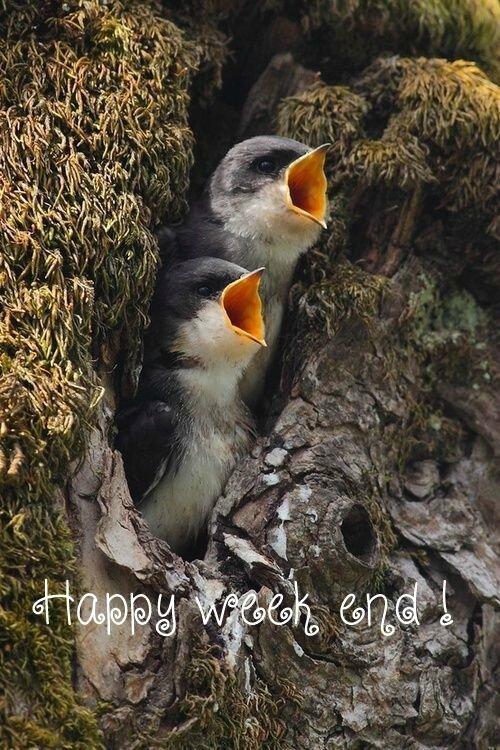HappyWE2