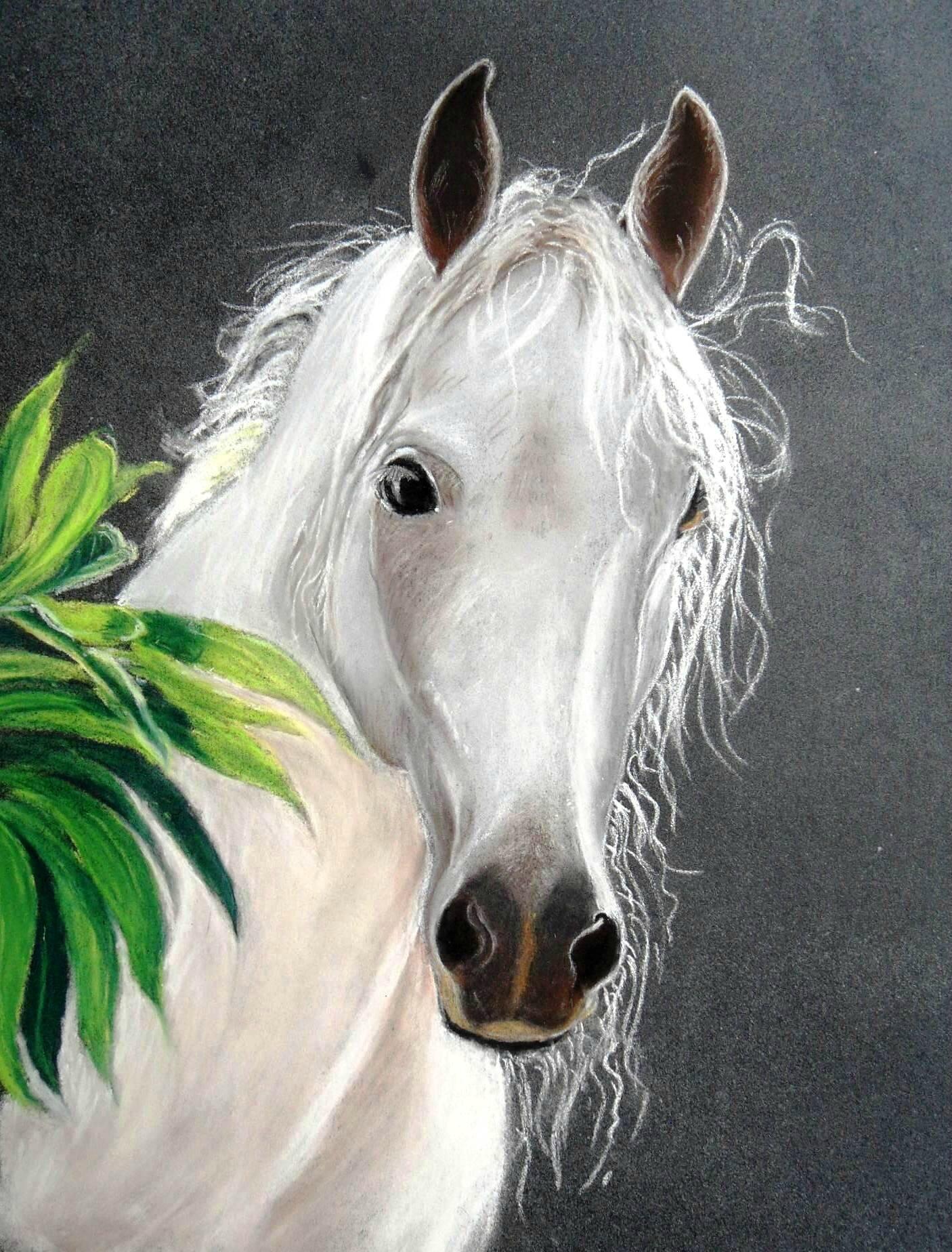 Cheval Blanc Pastel Sec Peintures Et Pastel De Pilou