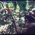 La circoncision chez les pygmées du gabon !