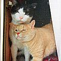 Tom et Max qui dit : mais pousse toi je vois rien !