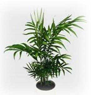 Palmier bambou conseils en am nagements paysag s - Plantes depolluantes pour la maison ...