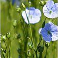 Fleurettes ...particulièrement bien 'entourée'