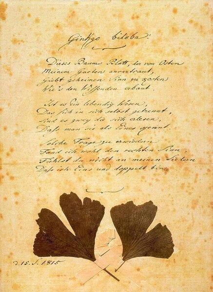 Goethe-ginkgo-biloba