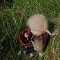 Poupées waldorff, une pure merveille