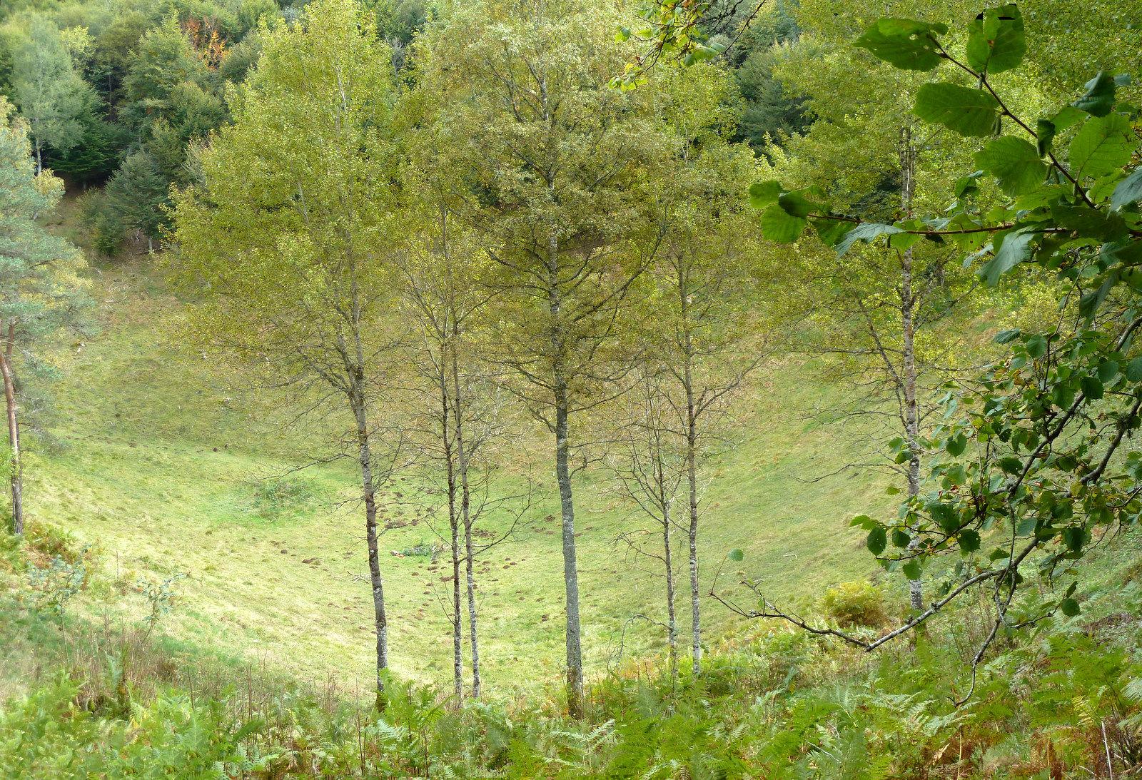 cratère du puy de Vichatel