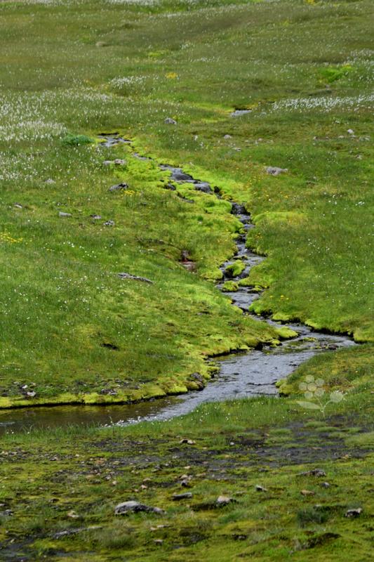 Islande, Heysteri_2
