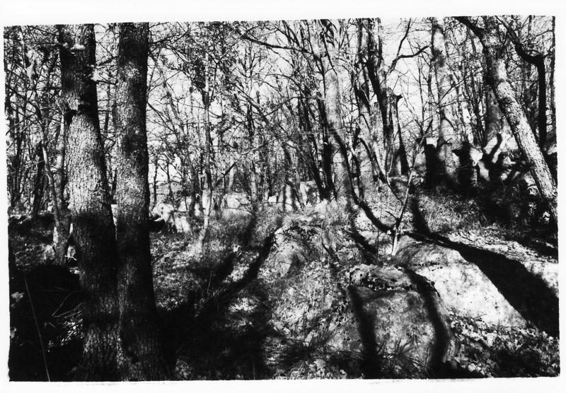 Le petit bois (du côté de Grasse, année 198?)