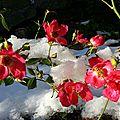 Beauté sous la neige