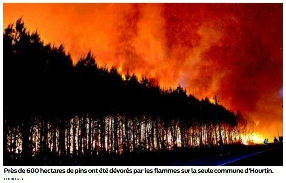 la forêt placée sous haute surveillance