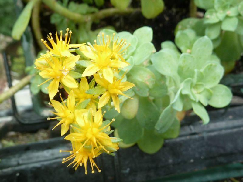 Jardini res de printemps 2 les cupidons sont tomb s - Plante a fleur jaune 6 lettres ...