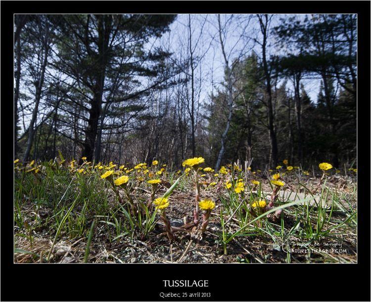 IMG_5212-naturelimages.com